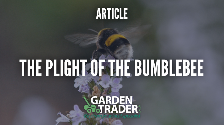 The plight of the bumblebee