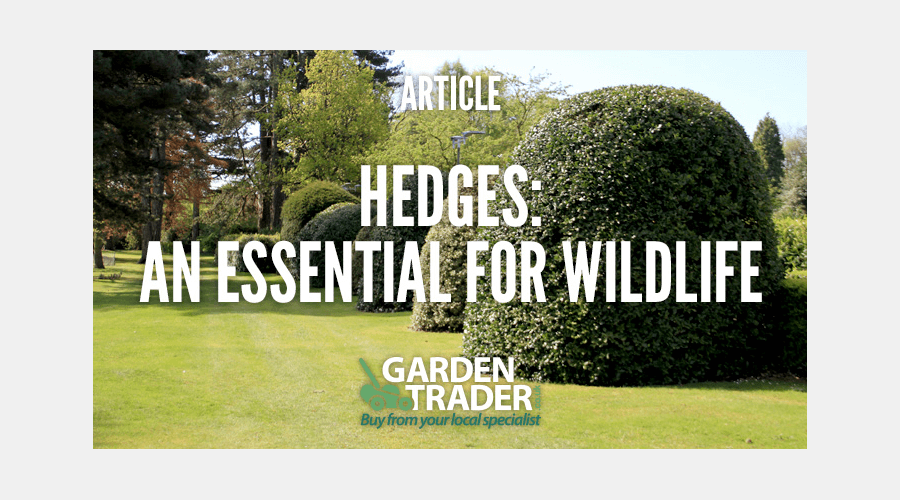 Hedges: an essential for wildlife